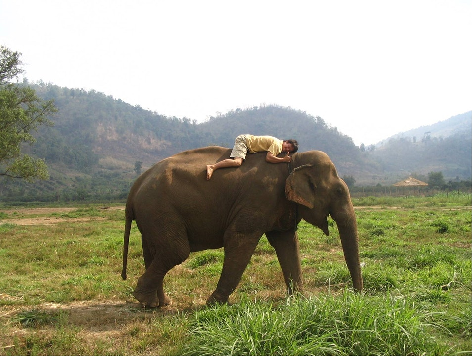 Volunteer at the Elephant Sanctuary Chiang Mai  Thailand