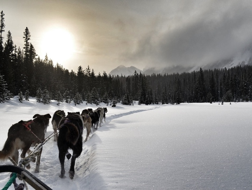 Dogsledding Through the Canadian Wilderness
