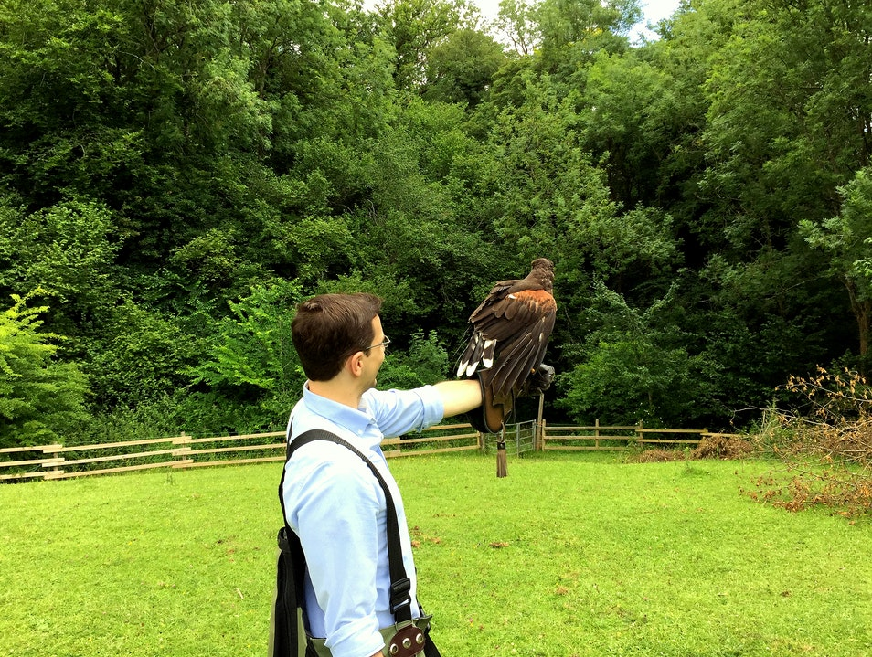 West of England Falconry Hawk Walk Midford  United Kingdom