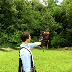 West Of England Falconry