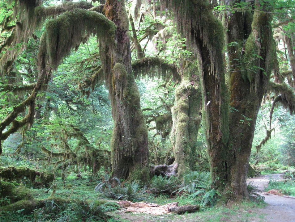 Walking the Rain Forest in Washington Forks Washington United States