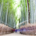 Arashiyama Bamboo Forest   Earth