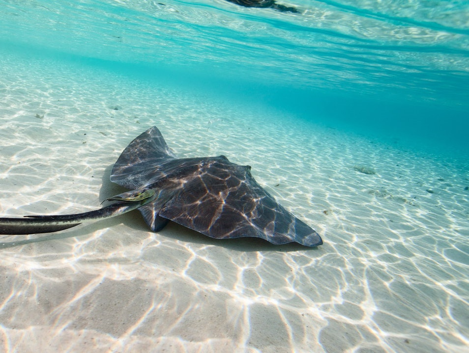 Stingray Cove Cat Island  The Bahamas