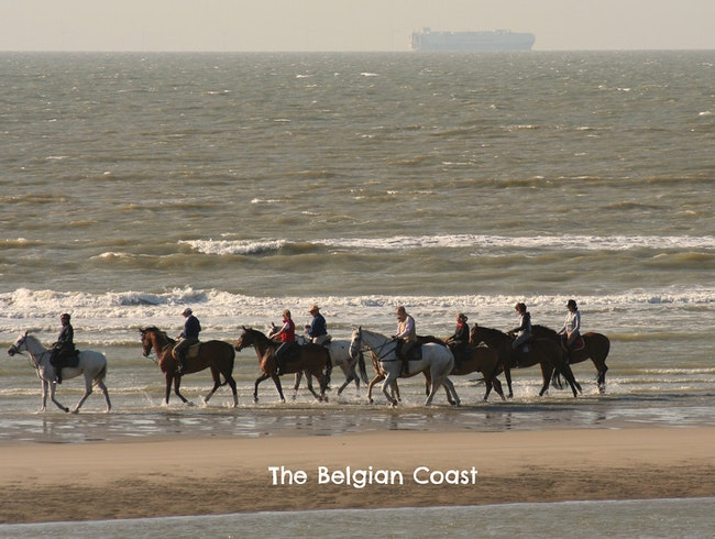 Trotting Along the Belgian Coast