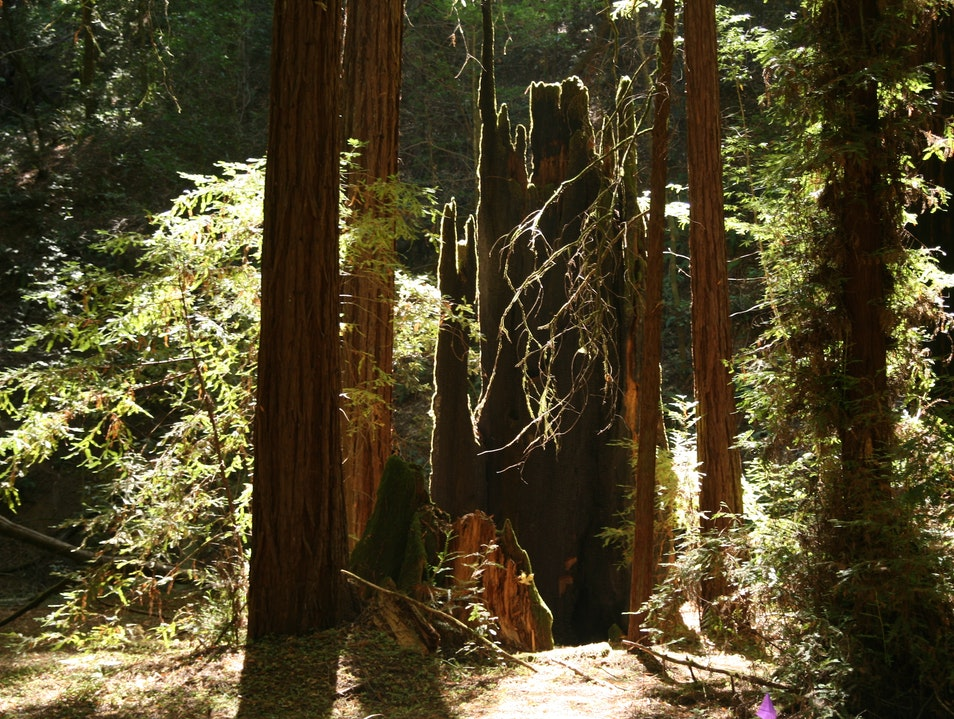 Hike the California Redwoods