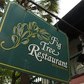Fig Tree Restaurant San Antonio Texas United States