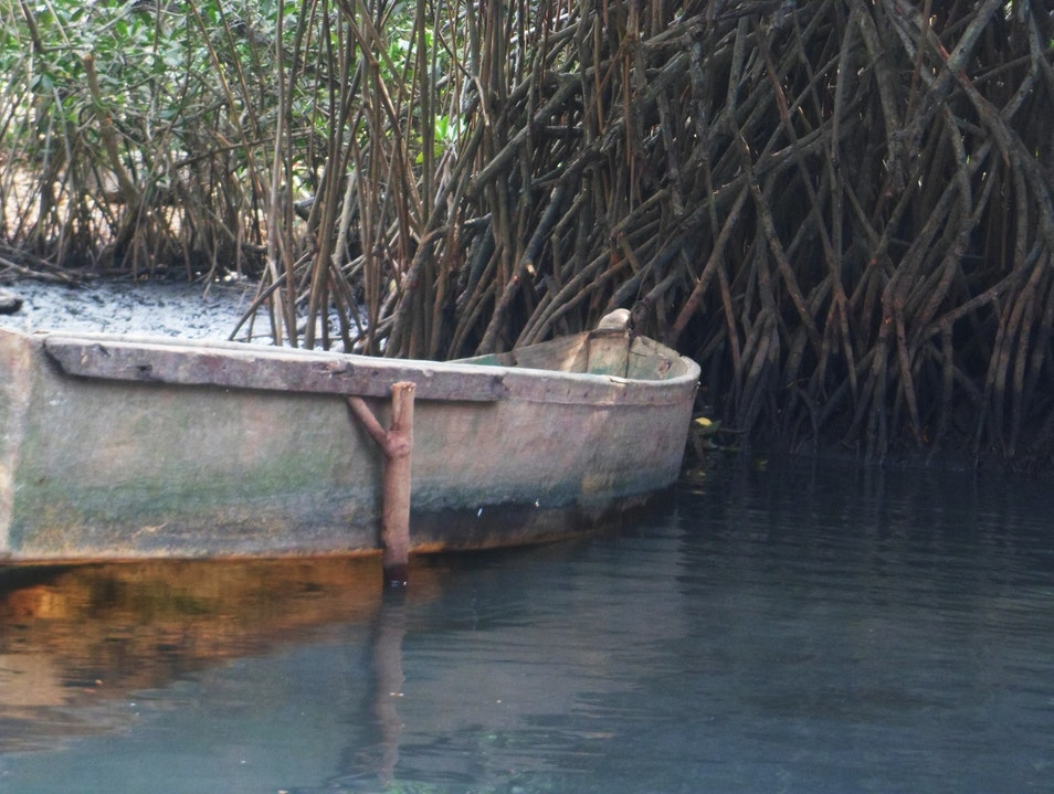 Tour The Mangroves of El Paredon On A Private Boat Escuintla  Guatemala