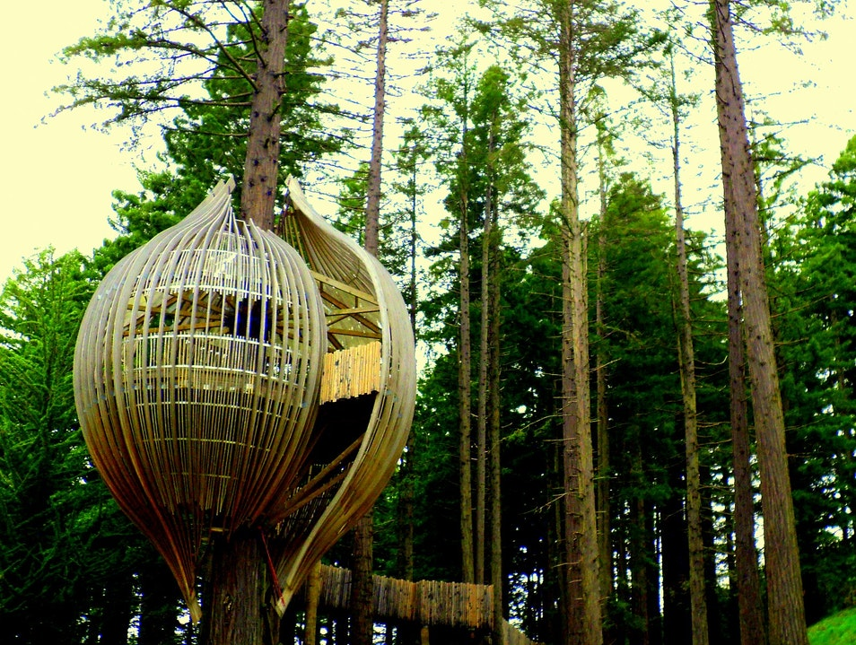 The Treehouses Outside of Auckland, New Zealand Warkworth  New Zealand