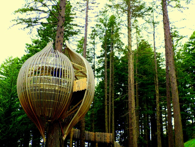 The Treehouses Outside of Auckland, New Zealand