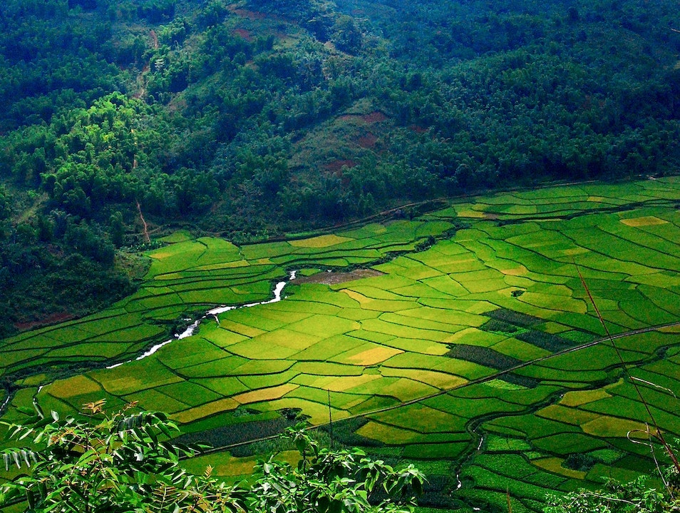 Looking down on the Rice Paddies