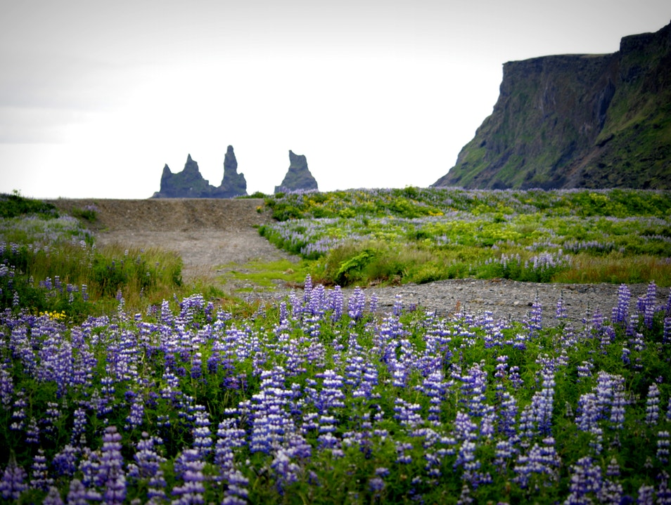 Reynisdrangar - sea stacks at Vik Vik  Iceland