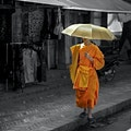 Morning Alms in Luang Prabang Luang Prabang  Laos