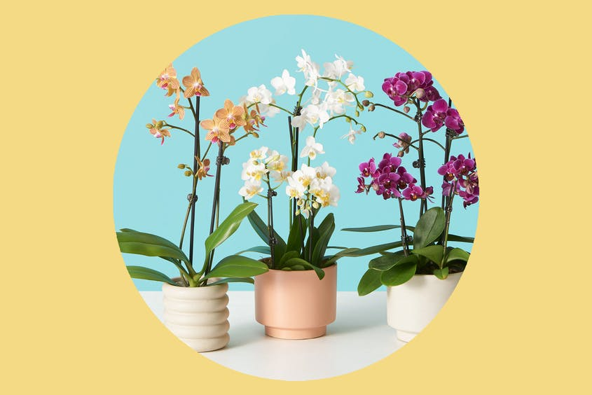 Brighten up your mom's home with some potted flowers.