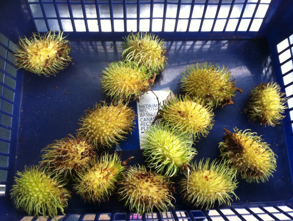 Yellow Rambutan?!?! Waimanalo Hawaii United States