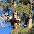 Flagstaff Extreme Adventure Course Flagstaff Arizona United States