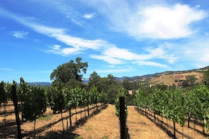 The Best of Napa County