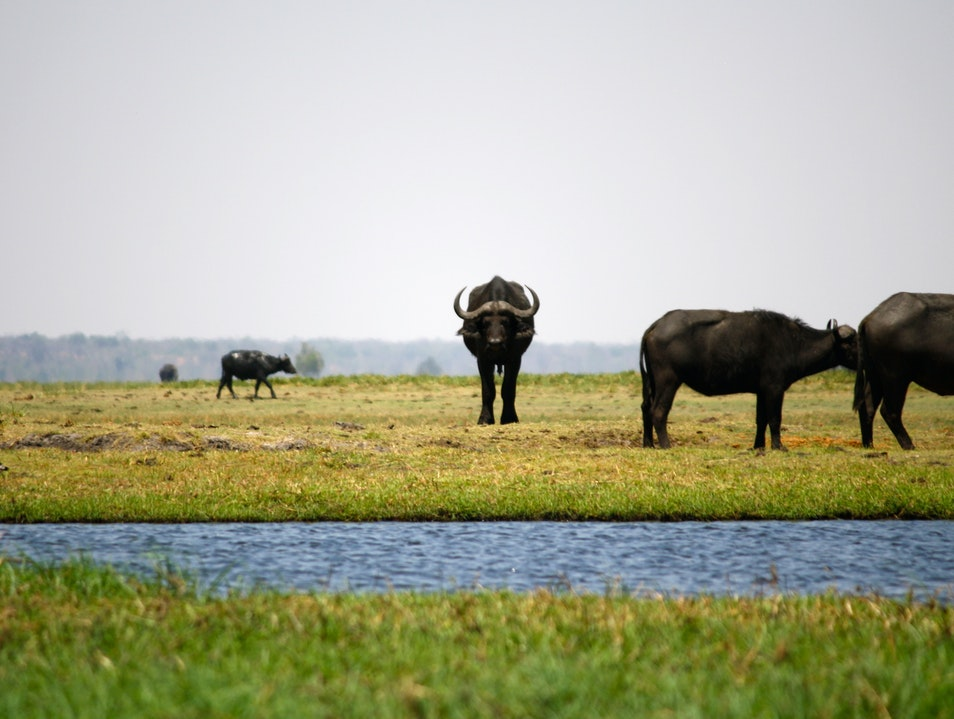 The Big Five Chobe  Botswana