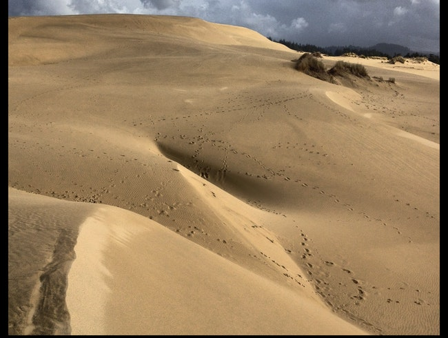 Dazzled by the Dellenback Dune Trail