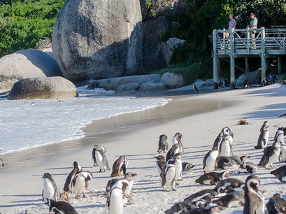 Penguins at Boulders Beach Cape Town  South Africa