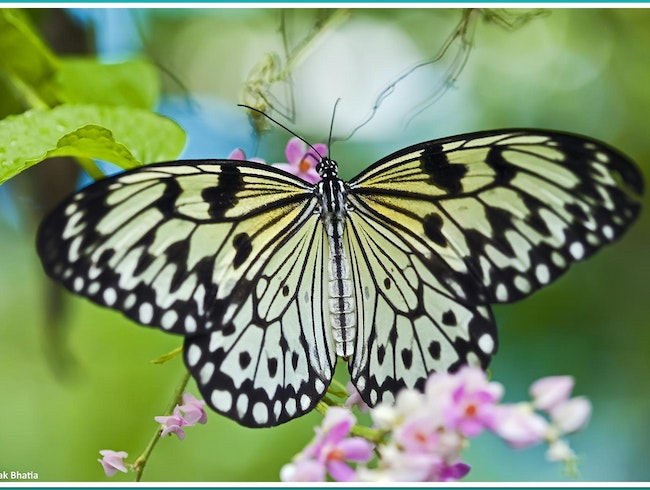 Explore the Butterfly Garden and Insect World