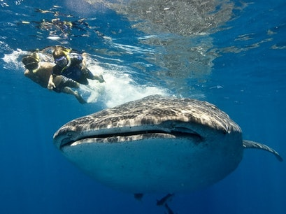 Whale Shark Tours Cancun  Mexico