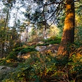 Mount Finlayson Trail   Langford  Canada