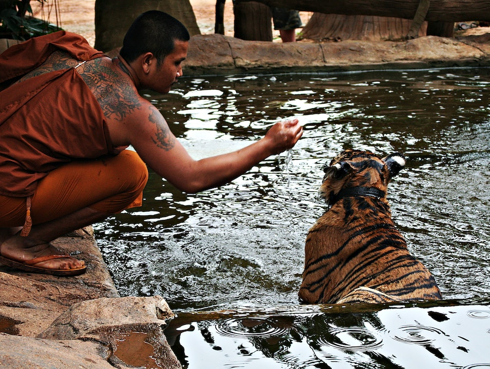 Just Me and My Tiger Lum Sum  Thailand