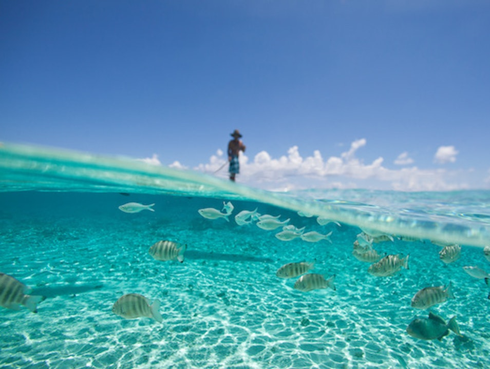 Dive Among Pearls in the Tuamotu Atolls Tuamotus Islands  French Polynesia