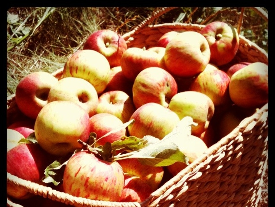Apple Fair and Festivals Sebastopol California United States