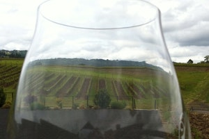 Adelsheim Vineyard