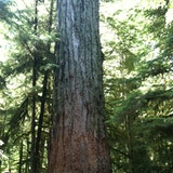 Cathedral Grove, MacMillan Provincial Park