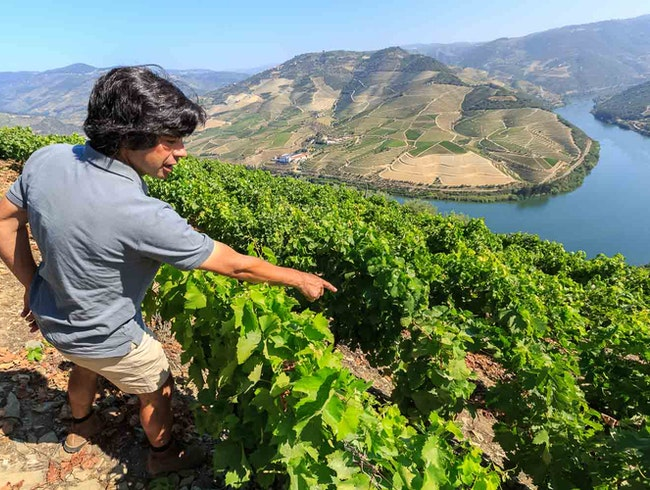 Douro's Best Wine Tour