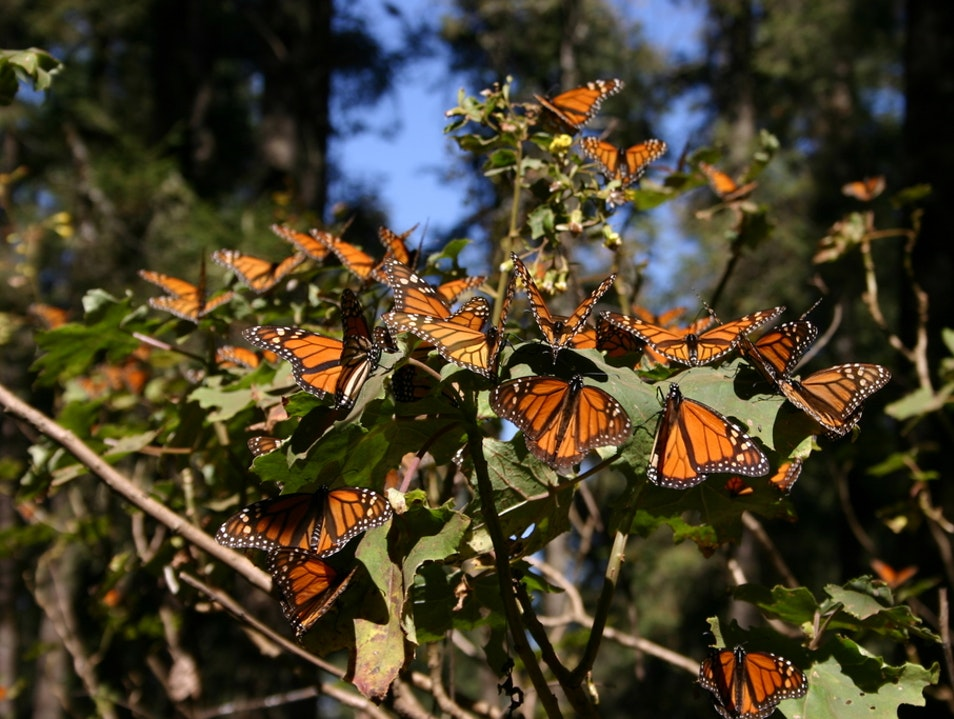 A rabble of monarchs State of Mexico  Mexico