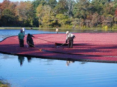 Mayflower Cranberries Plympton Massachusetts United States