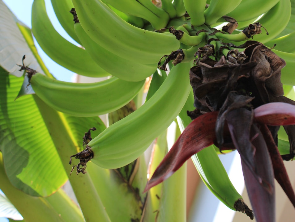 Plantains for Every Meal
