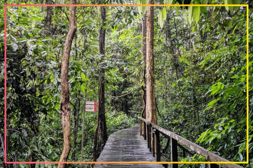 Prepare to get wet because yes, it does rain in the rain forest.