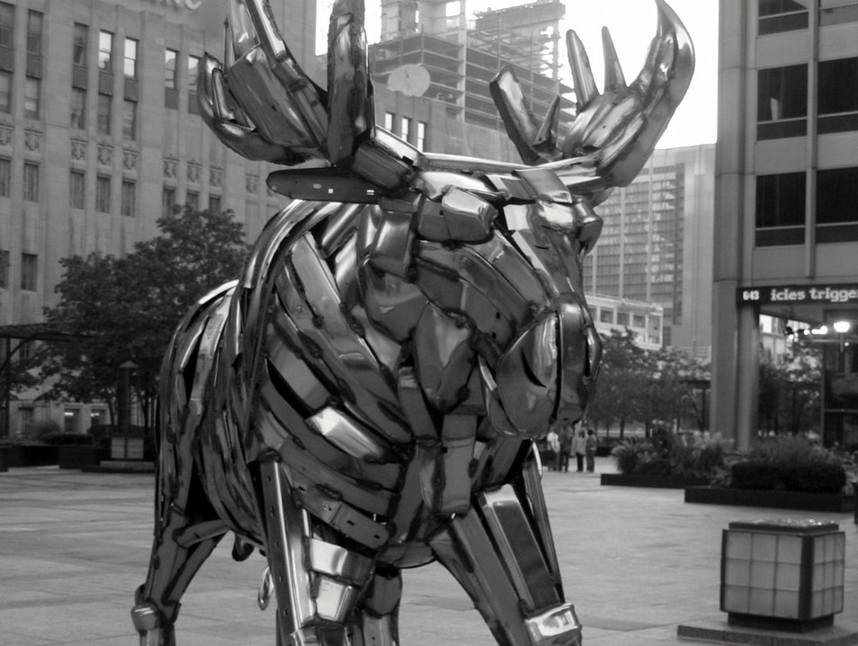 The Moose is Loose Chicago Illinois United States