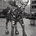 Moose (W-02-03) by John Kearney Chicago Illinois United States