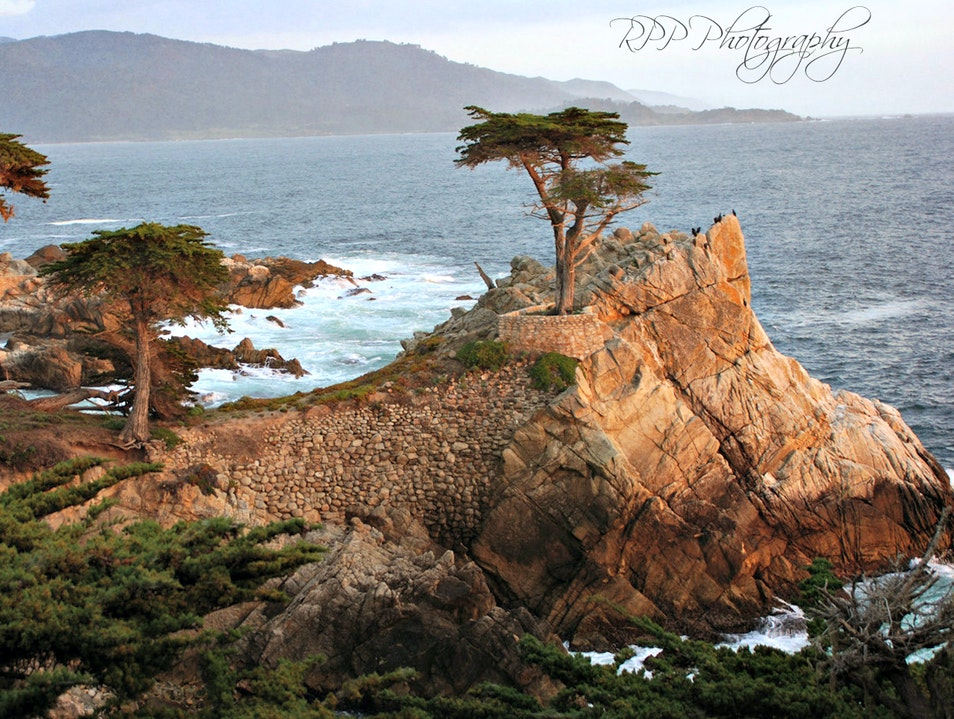 The Lone Cypress Tree Del Monte Forest California United States