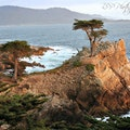 Lone Cypress Del Monte Forest California United States