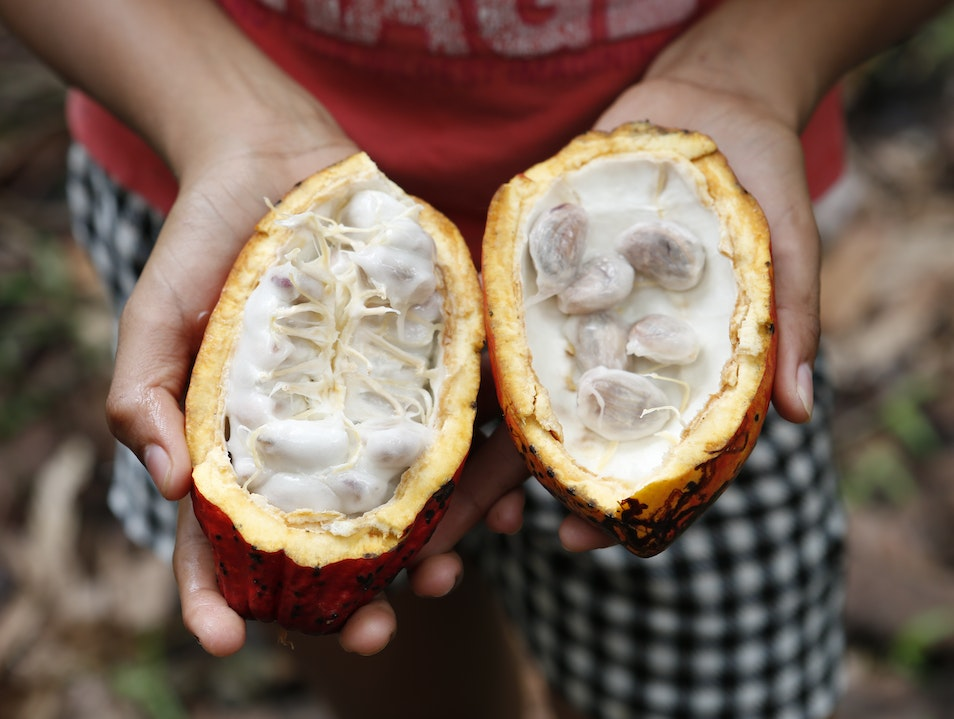 Quasar Expeditions Takes Chocoholics to the Land of Darwin and Cocoa