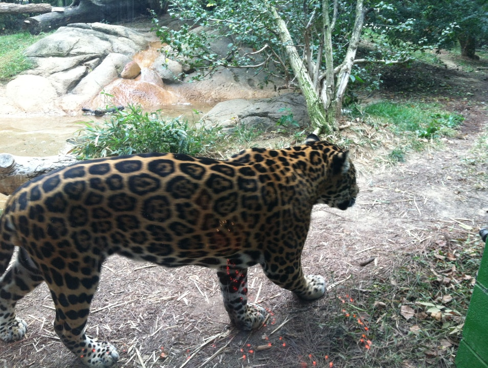 Chattanooga's Home for Wildlife