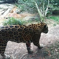 Chattanooga Zoo Chattanooga Tennessee United States