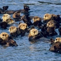 Wildlife Cruise Sitka Alaska United States