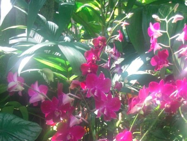 Where to Walk Among the Orchids