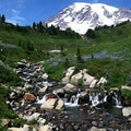 Mt Rainier Ashford Washington United States