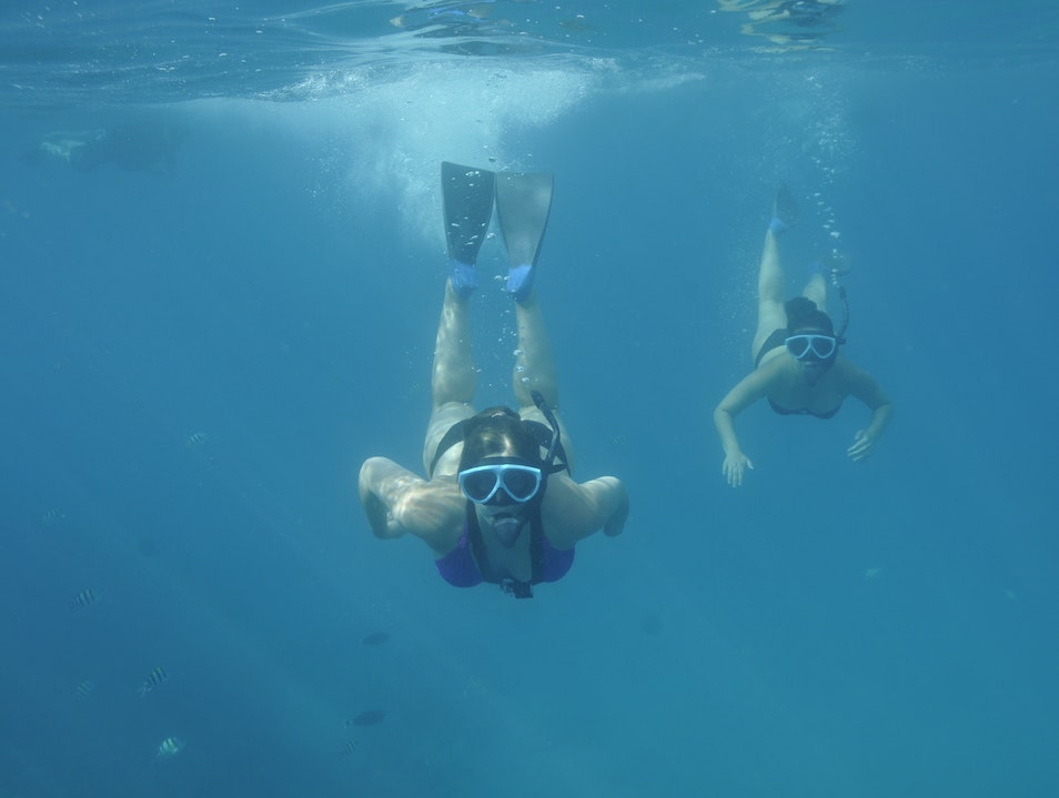 Self Guided Snorkelling VS Snorkel Tours: Ko Olina Dolphin, Whale & Sea Turtle Snorkel Adventure