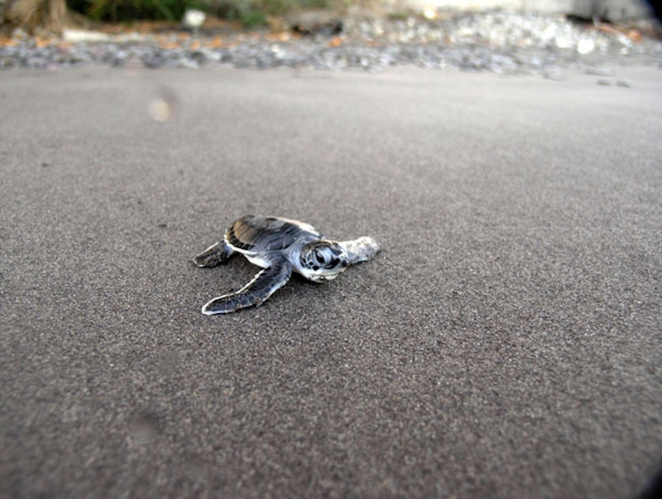 A Close Encounter With Sea Turtles