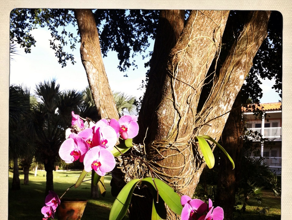 Orchids In Paradise