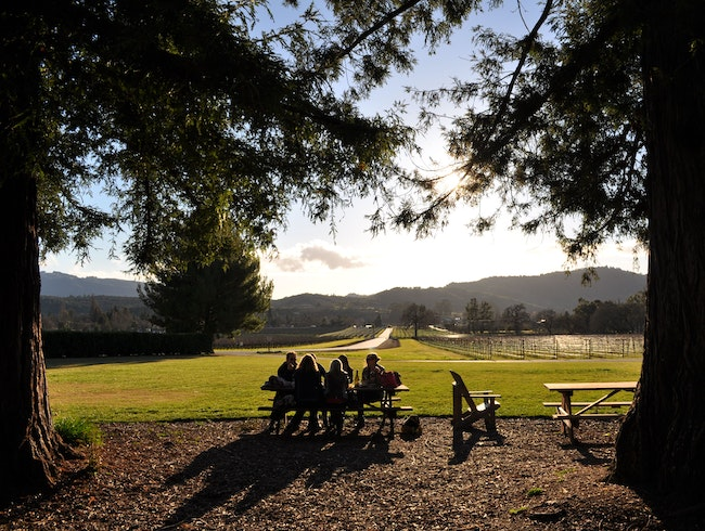 A Golden Picnic in Sonoma